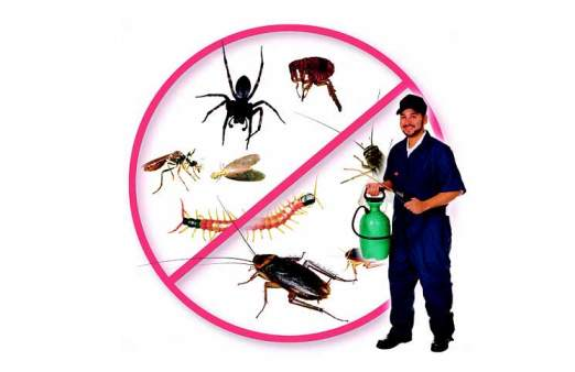 Công ty diệt côn trùng đáng tin cậy ở TPHCM